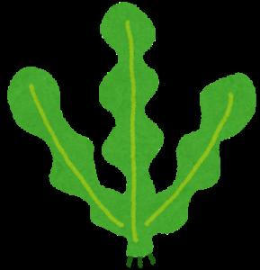 AGE 対策 食物繊維 野菜 キノコ 海藻