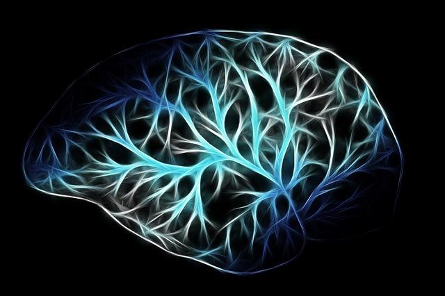 動画『運動が脳に与える驚きの効果』まとめ